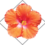 ALC-logo-hibiscus-contact-us